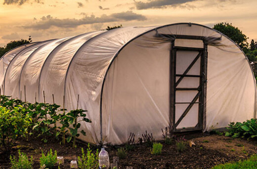 How to Grow Vegetables Year-round in a Greenhouse